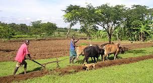 Afrika landbouw