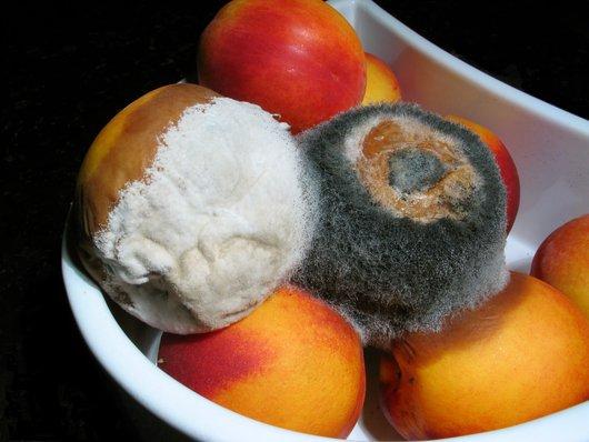 rot fruit