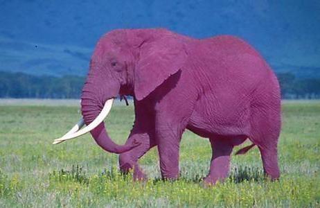 Elefante_rosado