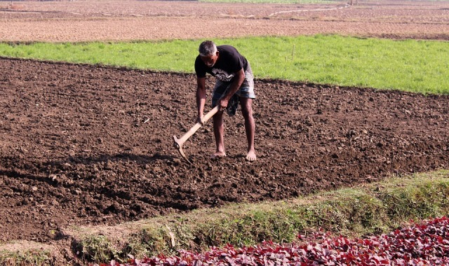 agricultural-2935273_960_720